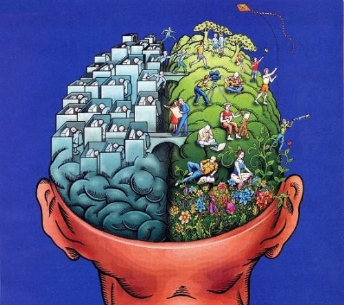 Allan Ajifo (2014). 좌뇌와 우뇌의 기능상 차이의 진화적 원인은 아직 분명하지 않다. 하지만 이마와 뒤통수의 뇌도 서로 다른 기능을 하는데, 유독 좌뇌와 우뇌의 기능 차이에 대한 대중의 관심이 상당하다. 좌우 균형에 대한 문화적 강박때문일까? - wikimedia(cc) 제공